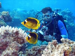 Striped butterfly fish and my buddy, Nikki, taken at Shar... by Anel Van Veelen